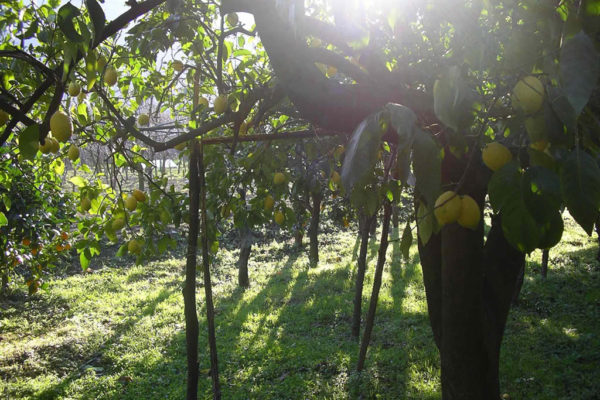 galleria_limone-costa-amalfi_15